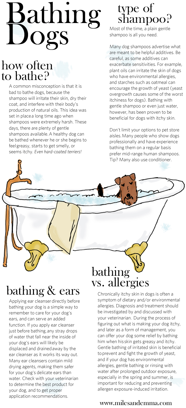 bathingdogs
