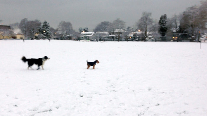 Snow day Welsh Terrier